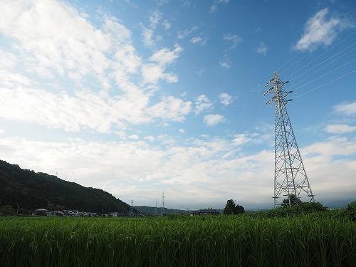 田んぼの上の夏空に刺すように立つ鉄塔