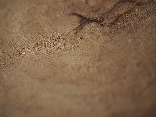 木の年輪の写真