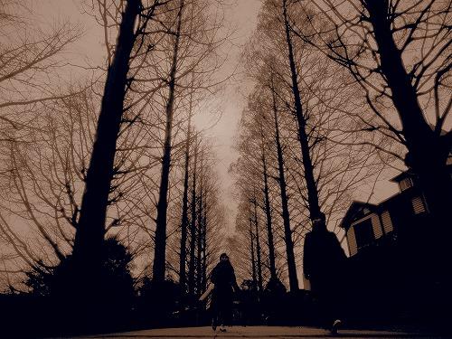 私の作品 並木道を歩く セピア色