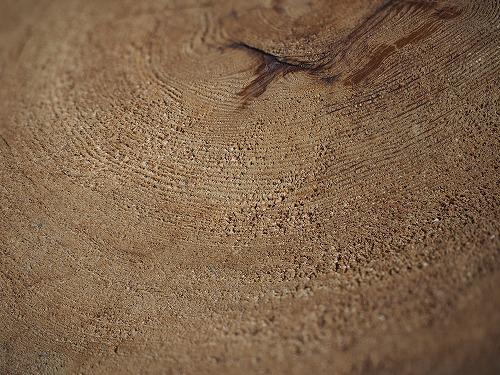 深度合成した木の年輪の画像