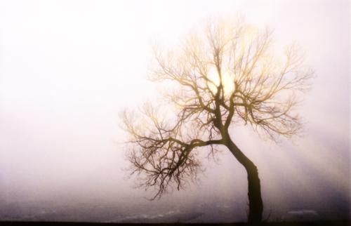 太陽光を加えると霧が晴れる雰囲気になる