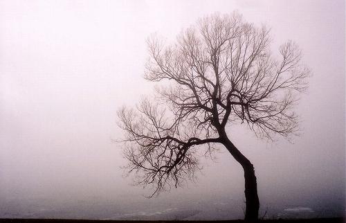 深い霧の中の木のシルエット