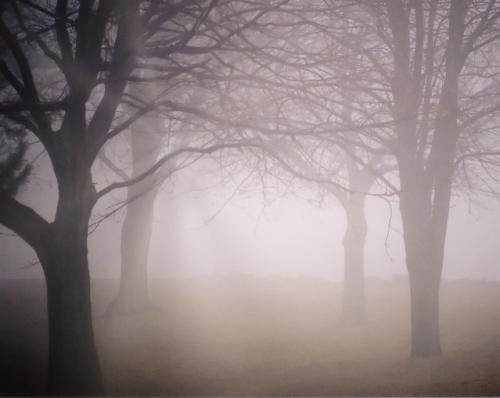 靄の中に差し込む光