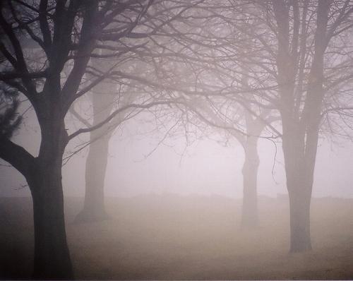 霞む木立の写真